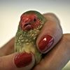 Red Bird Red Nails #1